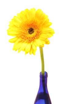 Free Yellow Gerbera In Blue Bottle. Stock Photography - 7020972