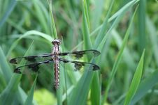 Free Dragonfly On Grass Stock Photo - 7021280
