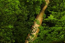 Free Bridge In The Forest Royalty Free Stock Image - 7021286