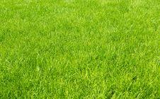 Free Grass Stock Photos - 7021793