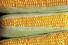 Free Corn Royalty Free Stock Photo - 7022445