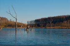Free Frozen Lake Of Dead Trees Royalty Free Stock Photos - 7023168