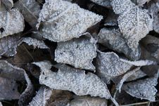Free Frozen Leaves Stock Image - 7023251