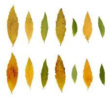 Leafs, Autumn Colors Royalty Free Stock Photos