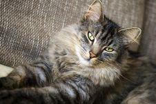 Free Cat Stock Image - 7024191