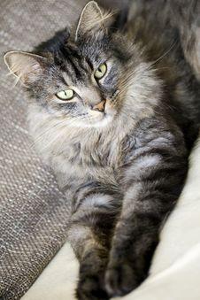 Free Cat Stock Photos - 7024213