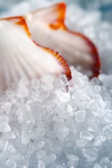 Free Heap Of Sea Salt With A Shellfish On Background Royalty Free Stock Photos - 7024578