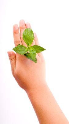 Free Holding Leaf Isolated Stock Photo - 7025440