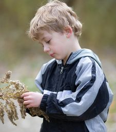 Cute Child Examining Goldenrod Plant
