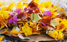 Colorful Petals Stock Photography