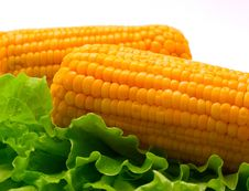 Free Corn Stock Images - 7026504