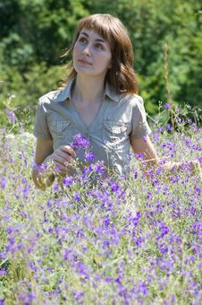 The Girl Collects Wild Flowers Stock Photo