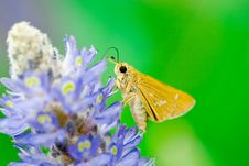 Free Butterfly Stock Image - 7027201