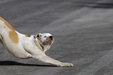 Lazy Dog Royalty Free Stock Photography