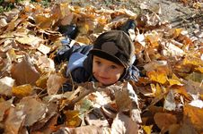 Free Boy In Leaves Stock Image - 7027881