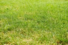 Free Abstract Green Grass Stock Photo - 7028440