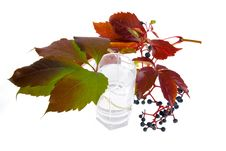 Free Leafage Of Wild Grape Stock Photos - 7029303