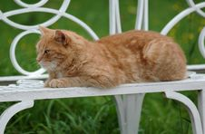 Free Red Green-eyed Cat Stock Photos - 7029443