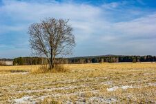Free Lonely Tree Royalty Free Stock Image - 70297256