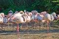 Free Flamingo Stock Photos - 7034153