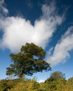 Free Tree And Sky Royalty Free Stock Photos - 7035818