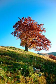 Free Autumn Tree Stock Images - 7031944