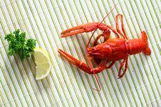 Free Crayfish Stock Photos - 7032393