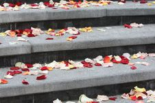 Free Stairs Covered With Rose Leaves Stock Photography - 7032612