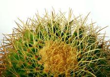 Free Cactus Royalty Free Stock Photo - 7032905