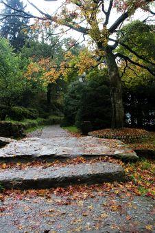 Free The Autumn Path Of Garden Royalty Free Stock Image - 7032906