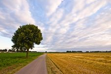 Free Country Road With Tree In A  Farmlandscape Stock Image - 7033191