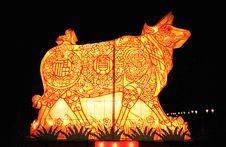 The Chinese Lantern Of Bull Stock Photo
