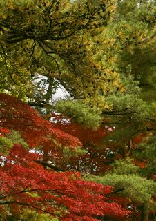 Free Combination Of Autumn Colors Royalty Free Stock Photos - 7034168