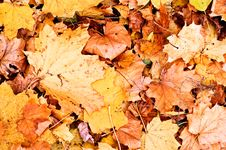 Free Autumn Fallen Leaves Background Royalty Free Stock Images - 7035919