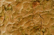Free Tree Bark Stock Image - 7035961