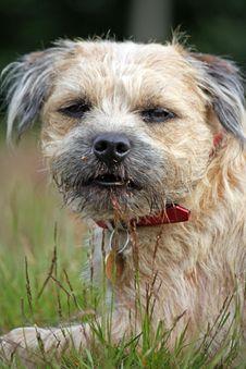 Dog Pedigree Stock Photos