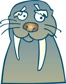 Funny Walrus Royalty Free Stock Images