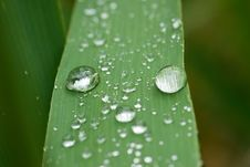 Free Rain Dops On Grass Blade Royalty Free Stock Photos - 7036418