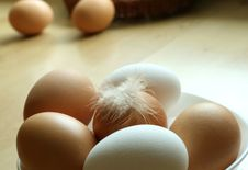 Free Eggs And A Feather From The Hen Royalty Free Stock Image - 7037776