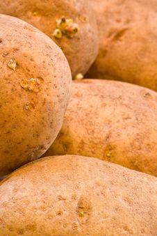 Free Potato Stock Photo - 7037900