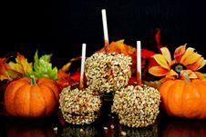 Free Autumn Apples Stock Photo - 7038200