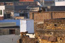 Free Agra Stock Photos - 7038293