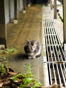 Kitten Under The House Royalty Free Stock Image