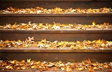 Free Fall Leaves On Steps Royalty Free Stock Photography - 7039137