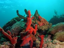 Free Colorful Coral Stock Photo - 7039350