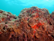 Free Coral Reef Stock Photography - 7039702