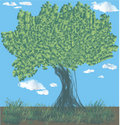 Free Tree Stock Photography - 7040872