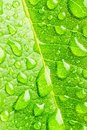 Free Leaf And Raindrops Stock Photography - 7042492