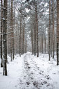 Free Winter Landscape - Path In Snowy Forest Stock Photography - 7042792