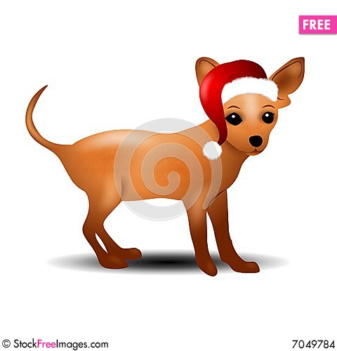 Free Chihuahua In Santa Hat Stock Images - 7049784
